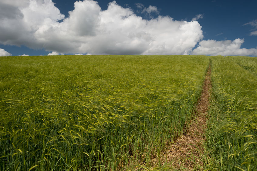 groei onzekerheid 2016 crisis landbouw agrarisch
